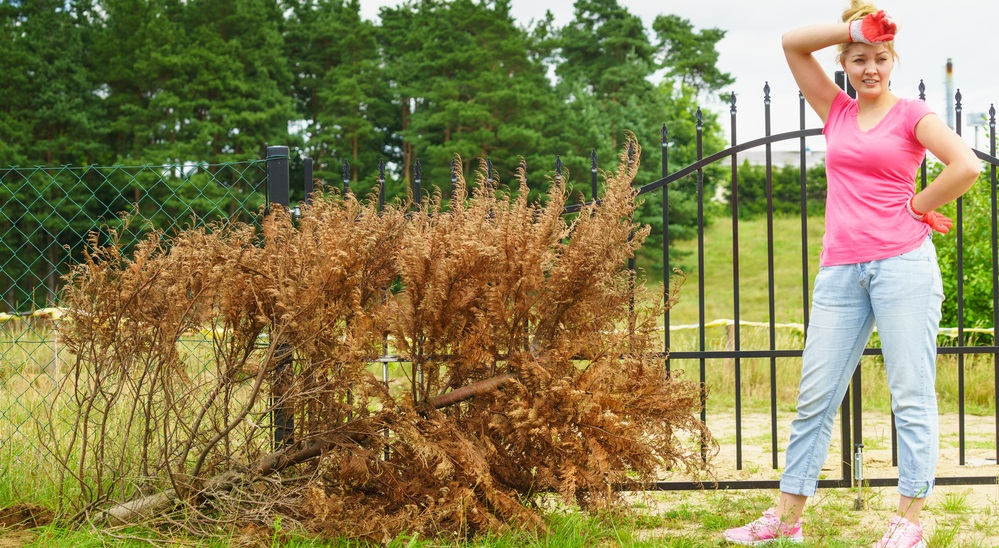 keep-your-outdoors-clean-with-yard-waste-removal