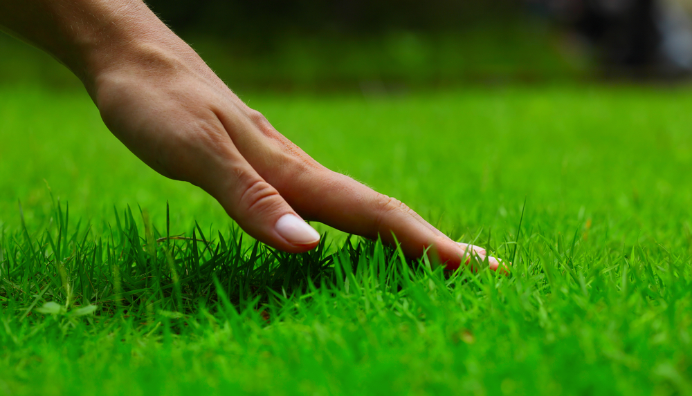 easy-lawn-tips-for-spring