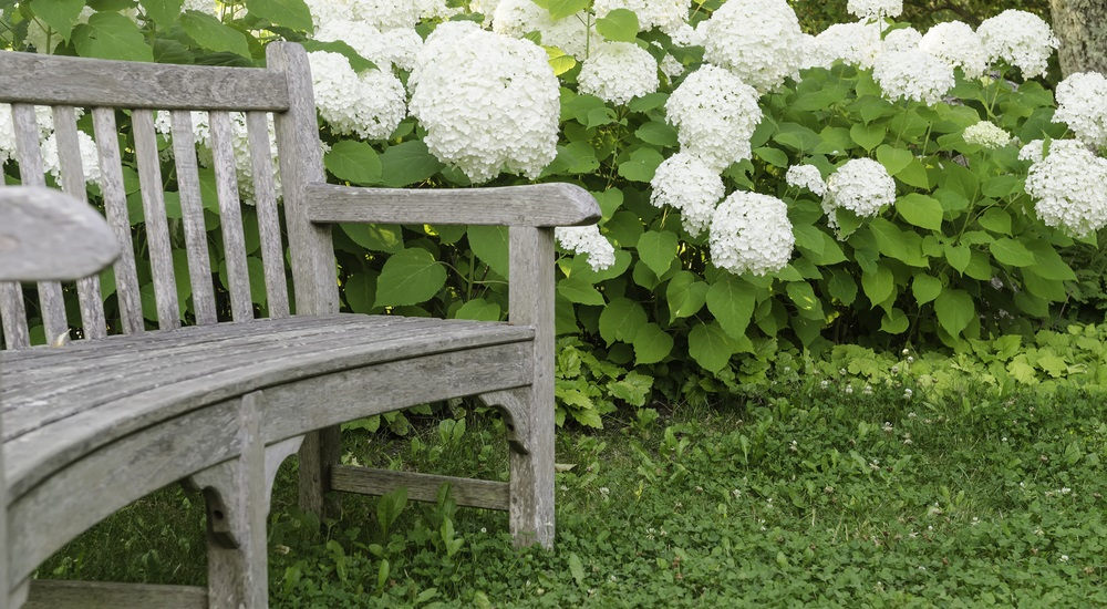 landscaping-without-a-big-budget-tips