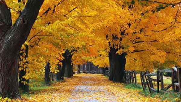 autumn-2018