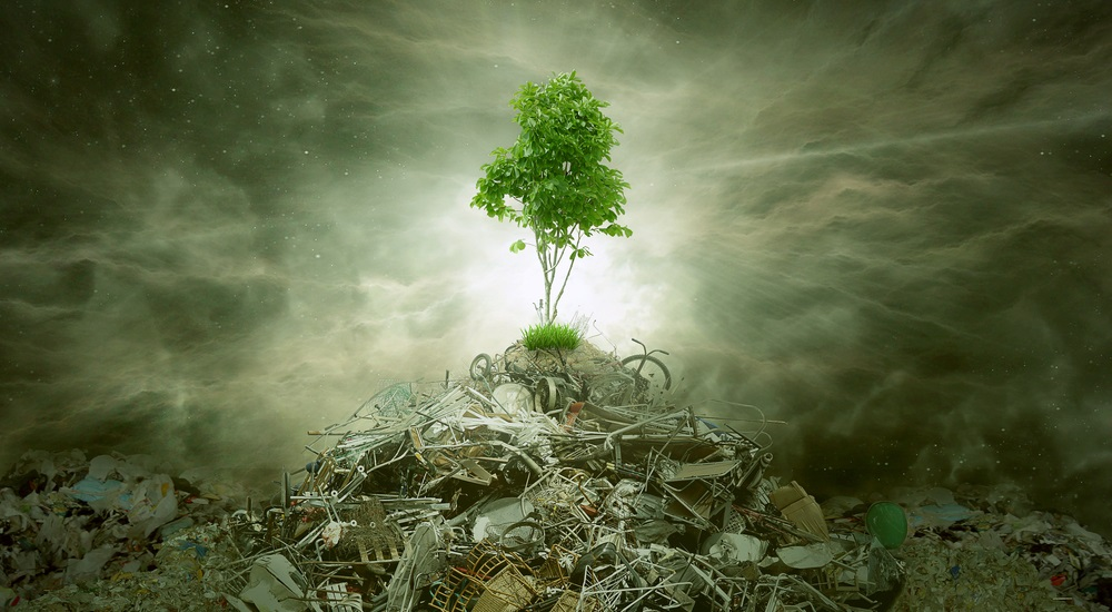 the-challenge-of-green-junk-disposal