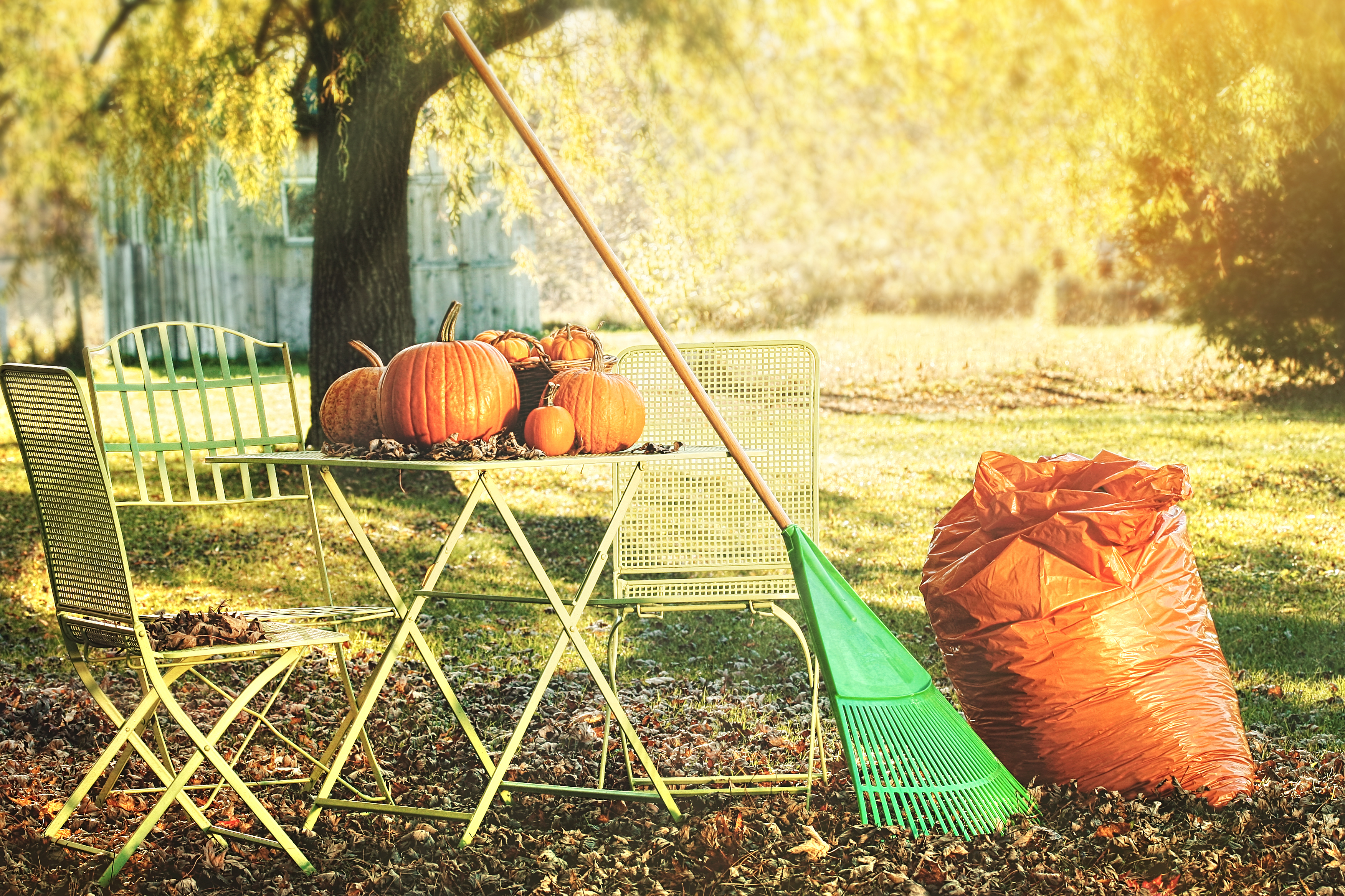 Preparing For The Fall